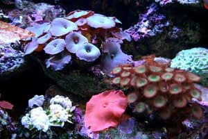 All types Soft Corals